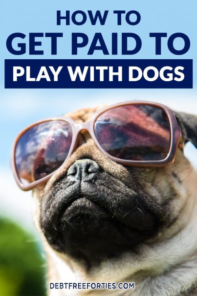 dog with sunglasses and text reading, How to Get Paid to Play with Dogs